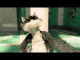 Zhriskas (вискас кошак, кот, прикол, ржака, реклама, 3D, мультик, анимация, мульт, 2011)